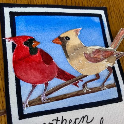 american cardinal detail