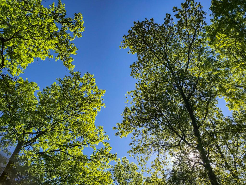 leafy spring sky view